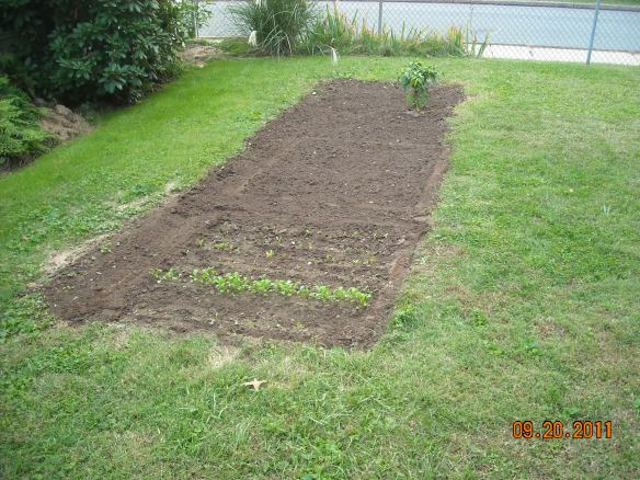 Backyard Garden Plot 2