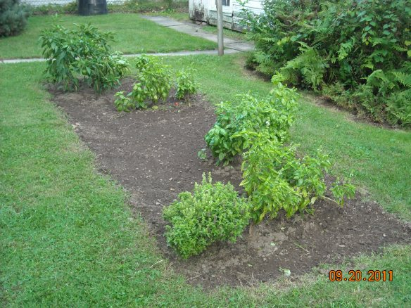 Backyard Garden Plot 1