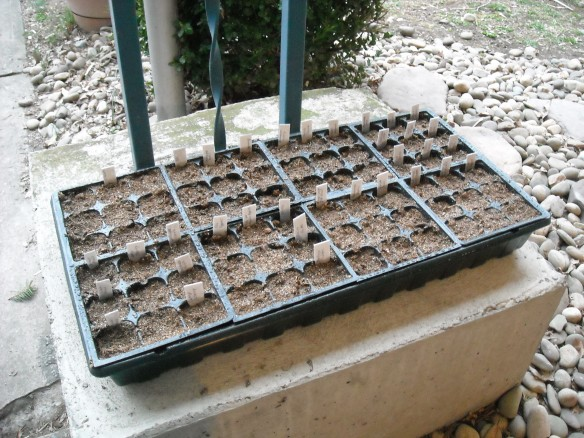 Seed tray filled with seeds and mix