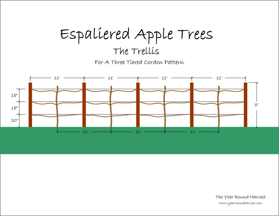 Espaliered Apple Trees Part Ii The Trellis The Year