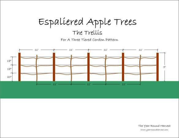 Graphic image of an apple espalier trellis