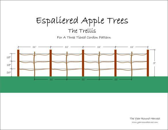 Graphic image of an apple espalier trellis