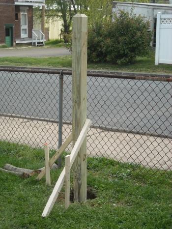 Setting the vertical trellis post.