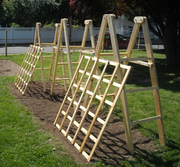 Tomato ladders with a cucumber trellises.