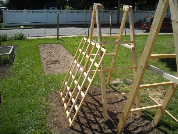 Tomato Ladders with cucumber trellises.