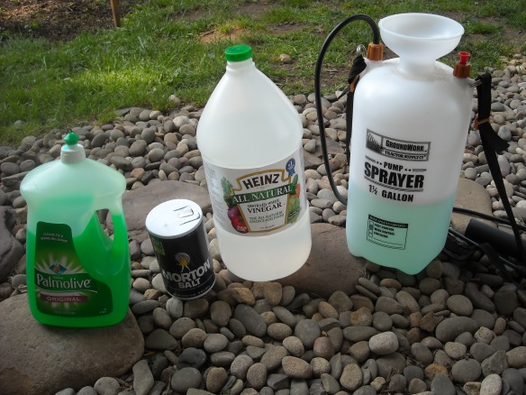Ingredients for homemade weed killer.