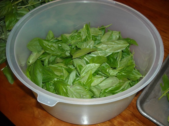 Bowl of basil leaves.