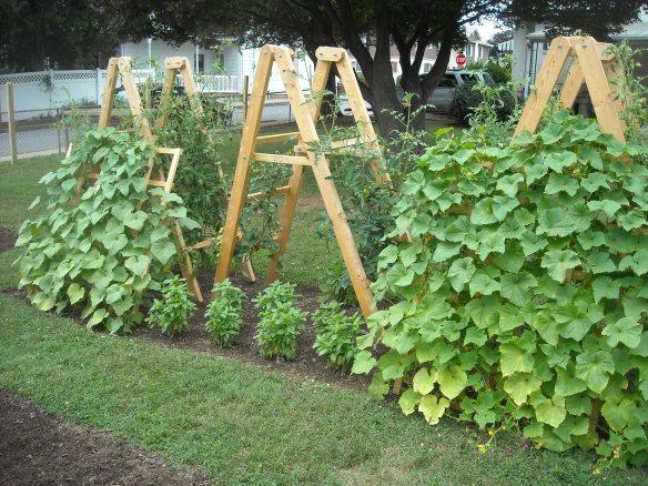 Tomato Ladders & Cucumber Trellis