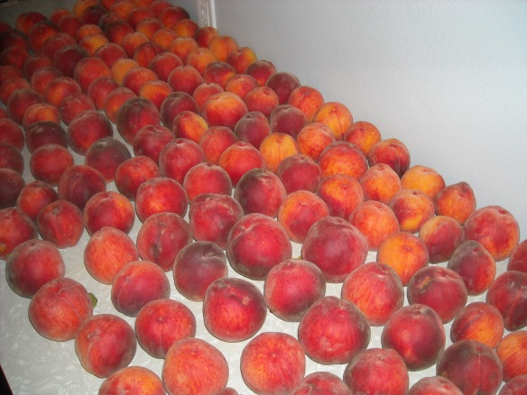 Fresh peaches on the countertop.