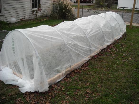 Winter garden under a row cover.