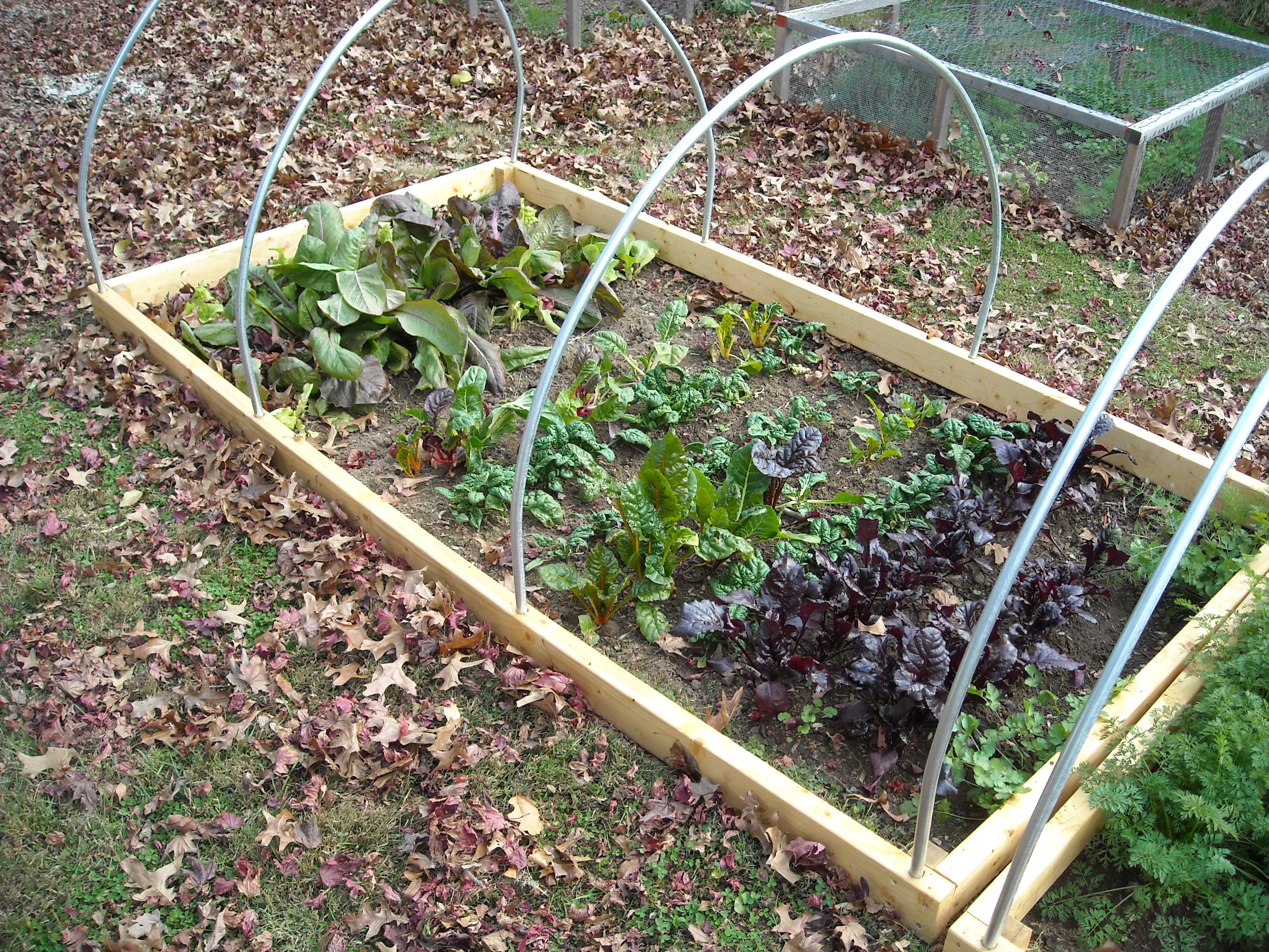 winter garden update u2013 11 29 12 the year round harvest