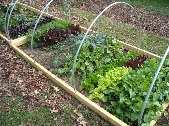 Vegetables in the winter garden.