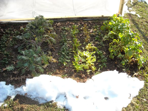 Winter Garden Vegetables