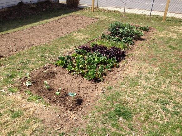 Spring garden 4-7-13