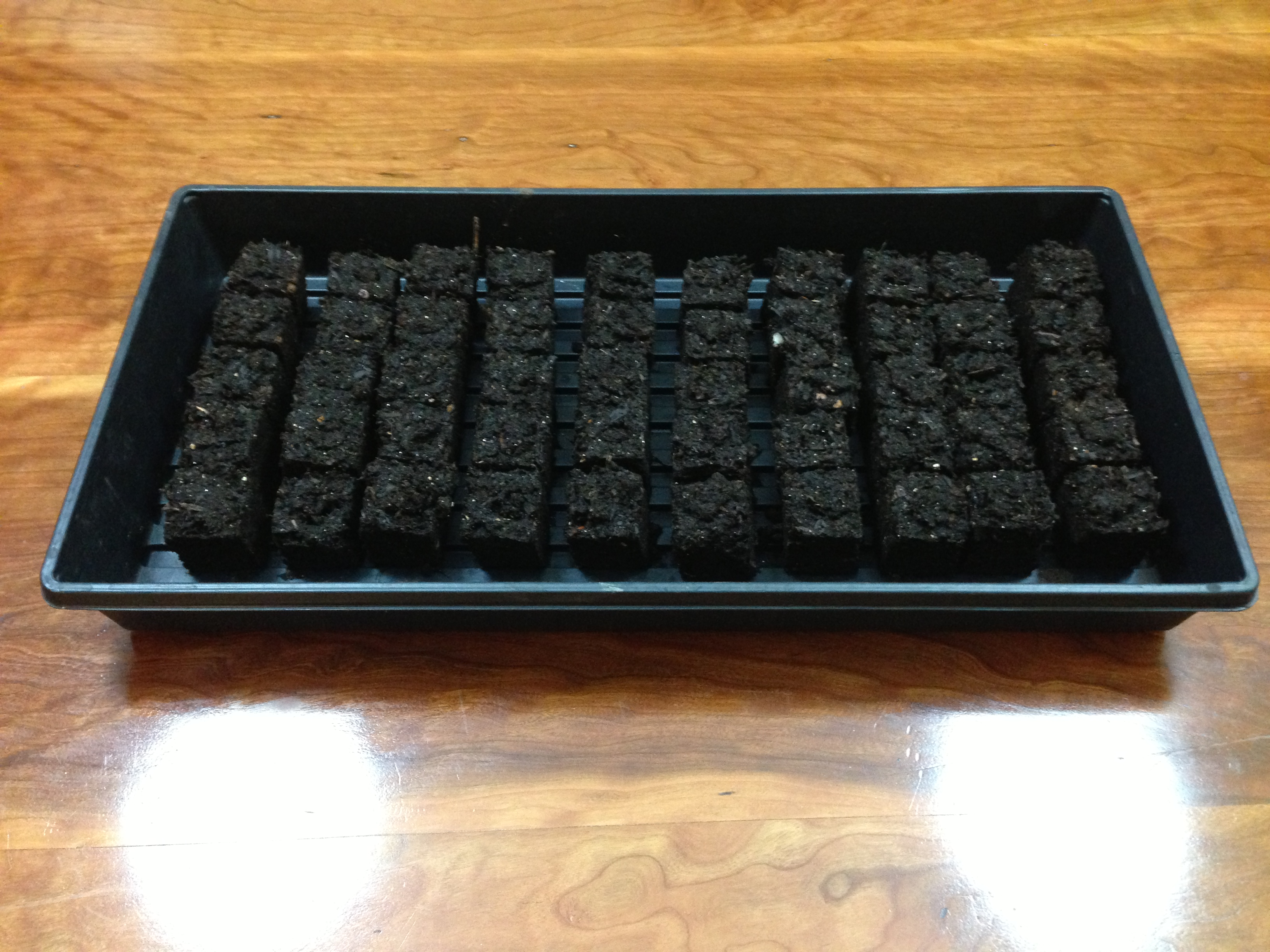 A tray of fall seedlings.