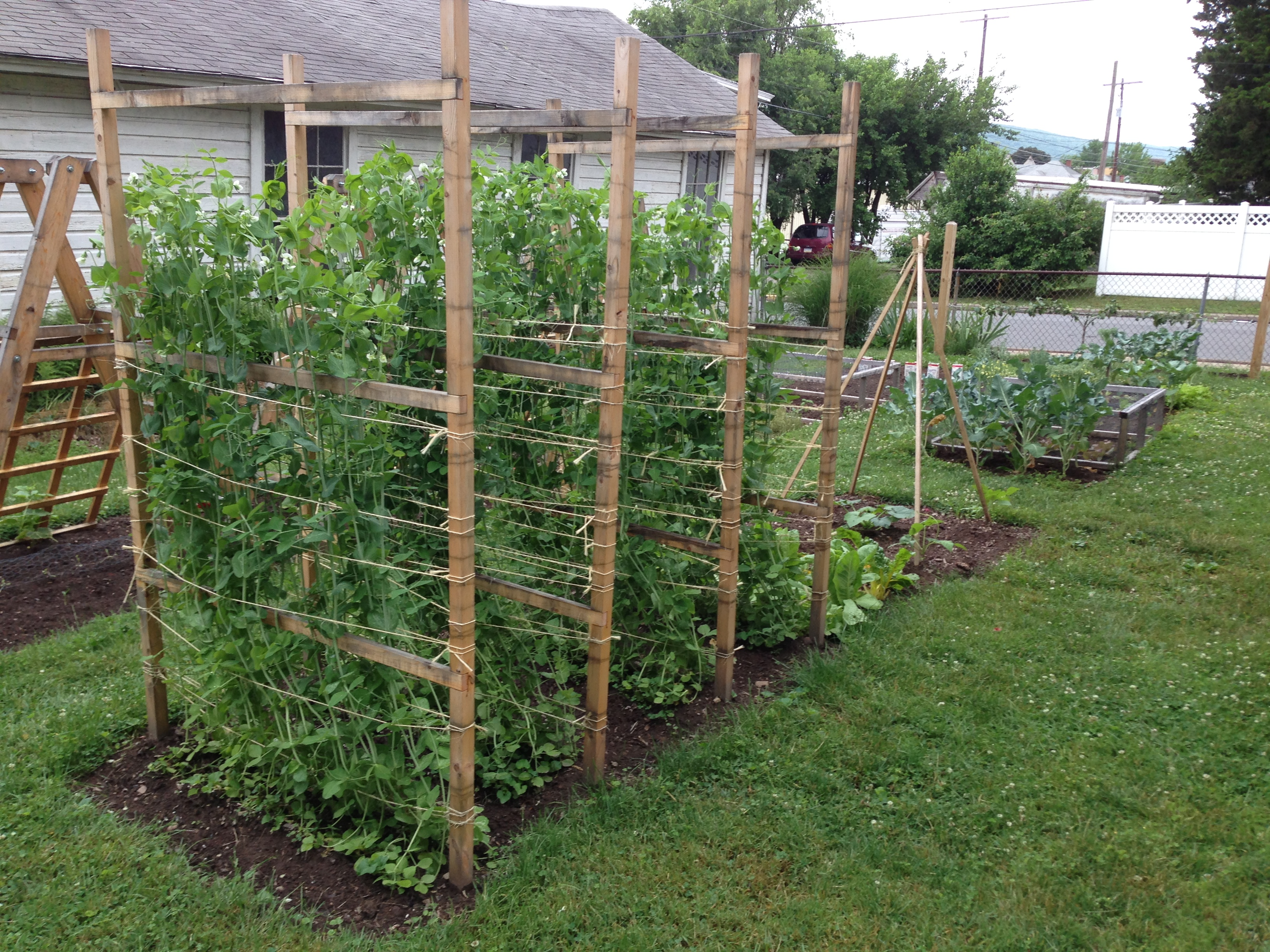 Pea Spacing Raised Bed