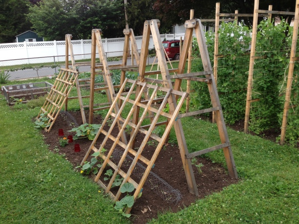 Tomato and Cucumber Ladders