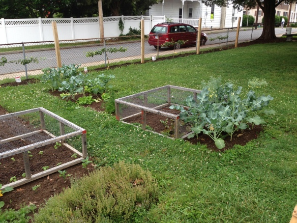 Vegetables growing in the spring garden.
