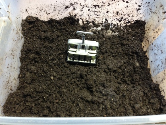 "3/4"" block mold in soil mix"