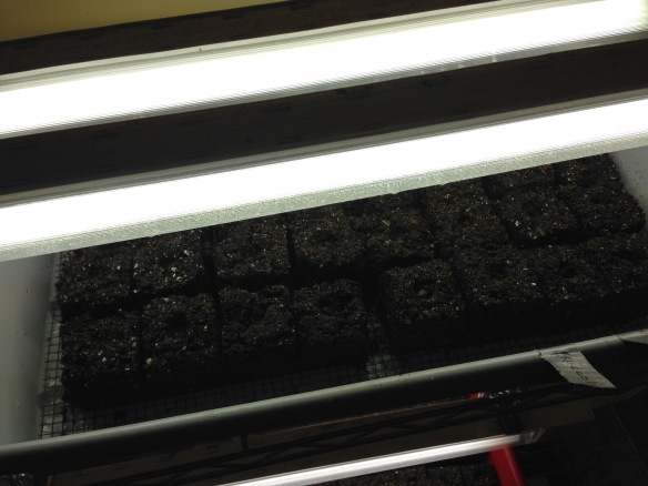Soil Blocks Under the Grow Lights